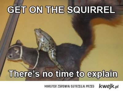 Frog & Squirrel