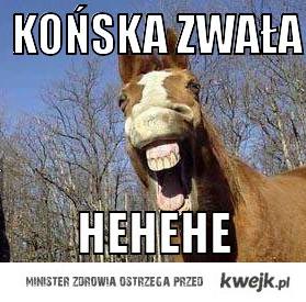 Końska zwała