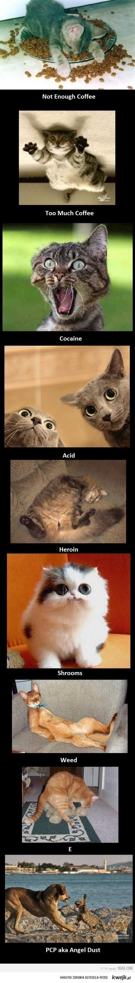co narkotyki z Tobą robią XD