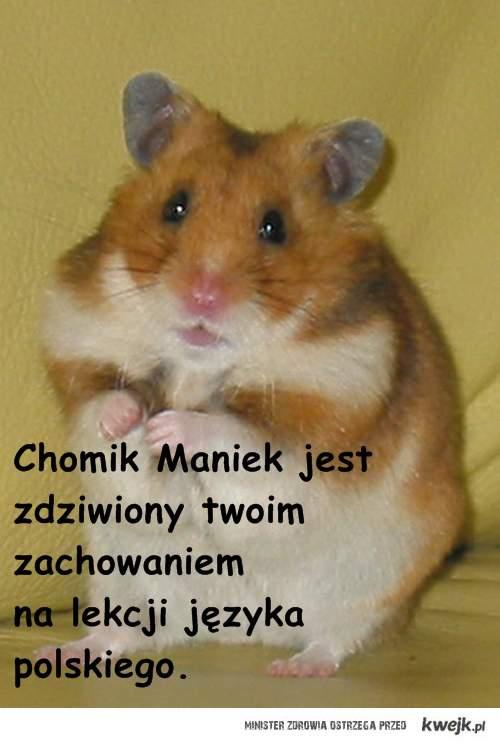 Chomik Maniek