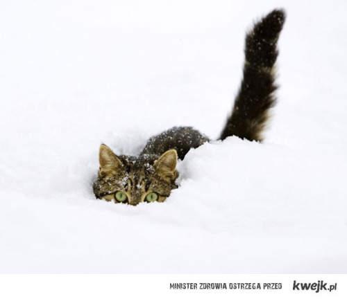 W śniegu