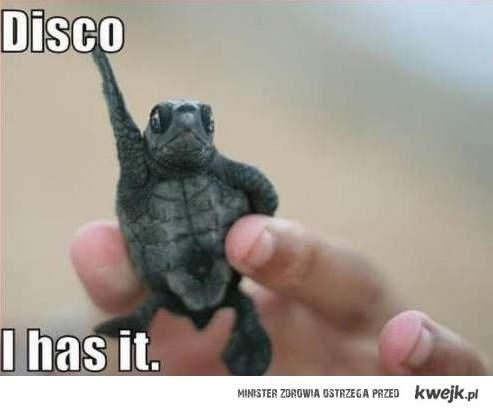 Disco żółw