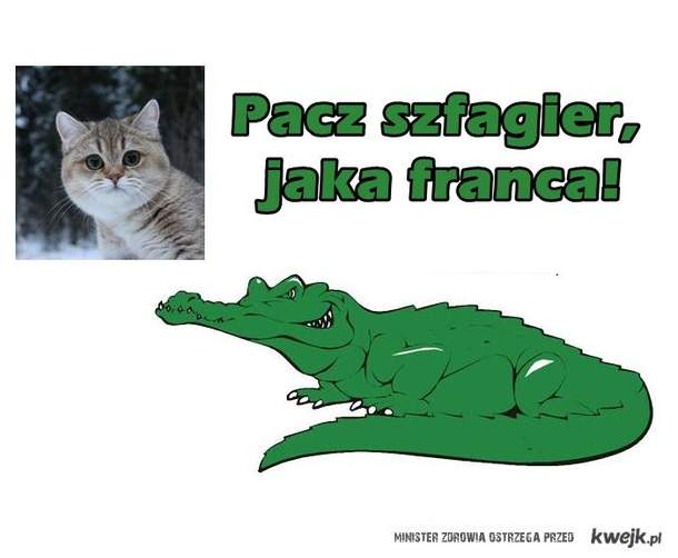 Starecat & Forfiter