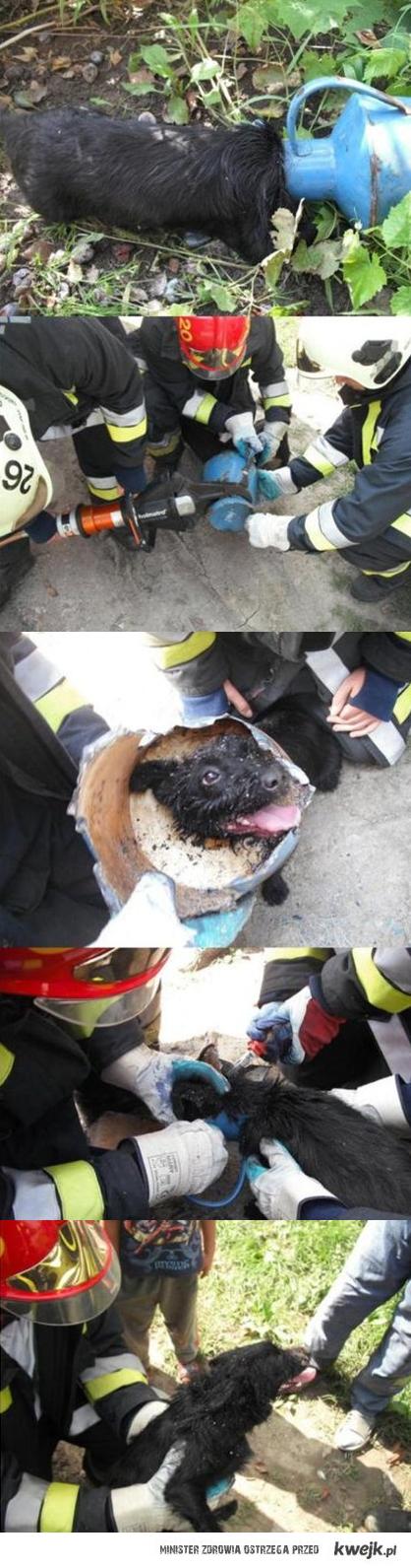 Pies, 112, Straż Pożarna