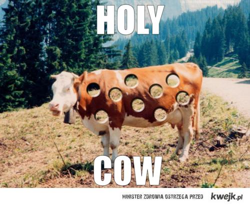 dziurawa krowa