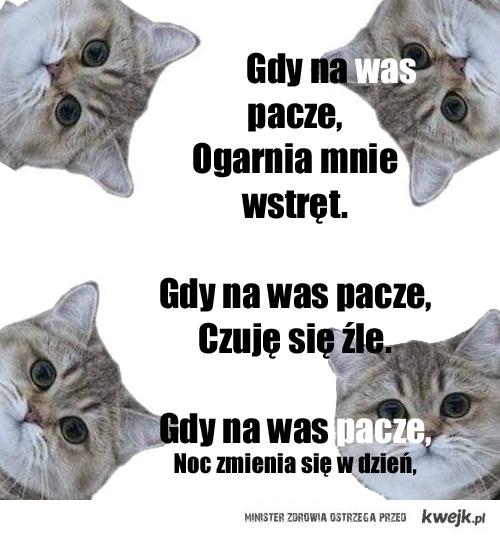 Kot z kwejk