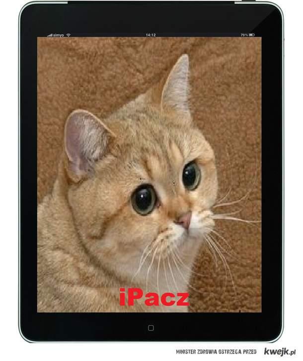 iPacz