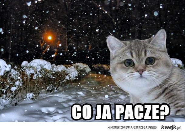 śnieg ja pacze