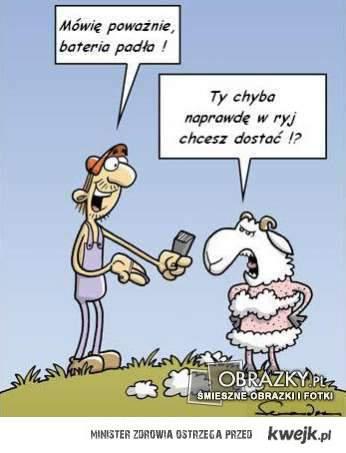 Golenie owcy