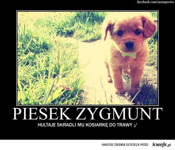 Szczeniak Zygmunt