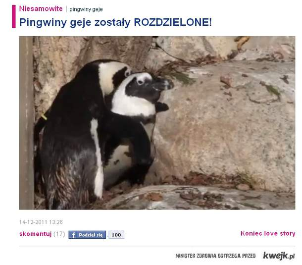 Pingwiny geje