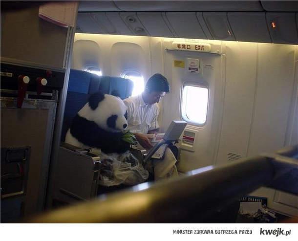 Panda w samolocie