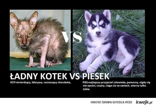 Kot Vs Pies Ministerstwo śmiesznych Obrazków Kwejkpl