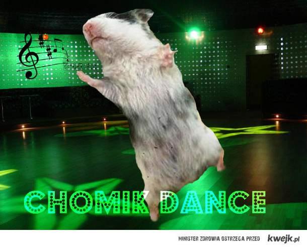 chomik dance