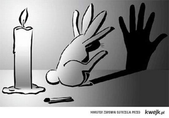 bunny shadows