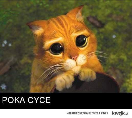 poka cyce