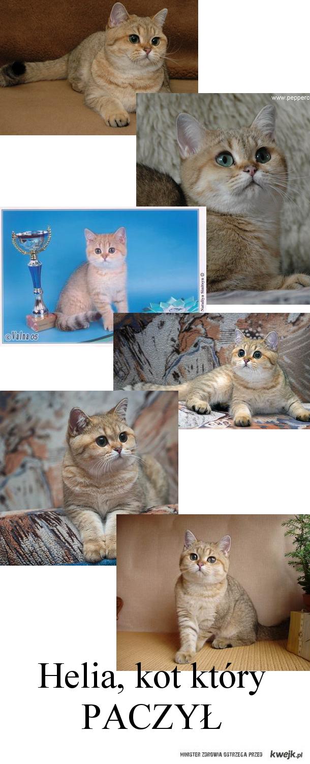 Heliya Peppercats, kot który paczy