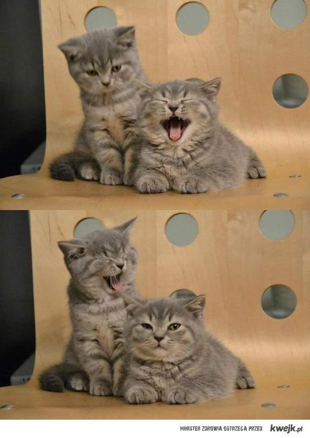 Aaa, kotki dwa
