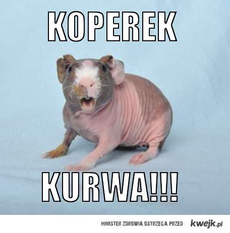 KOPEREK KURWA!