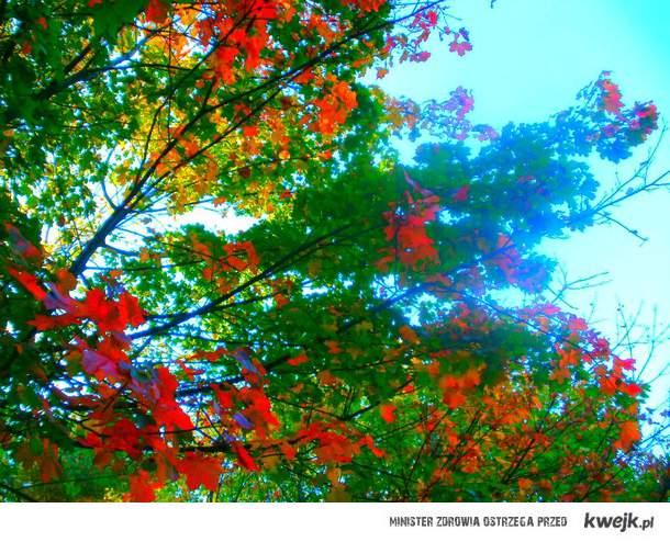 jesień ♥
