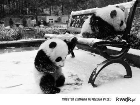 Pandy w śniegu <3
