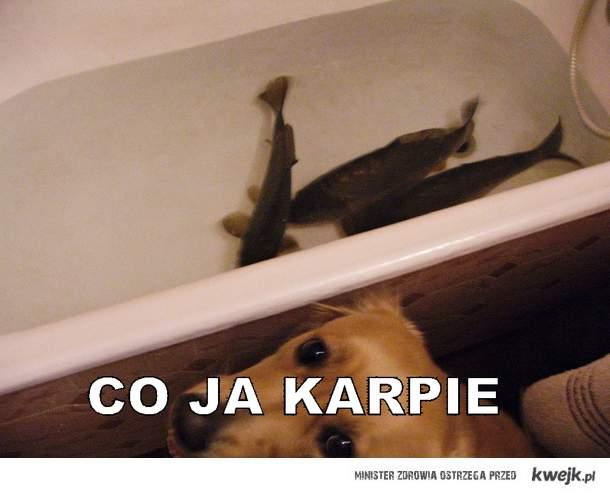 karpie