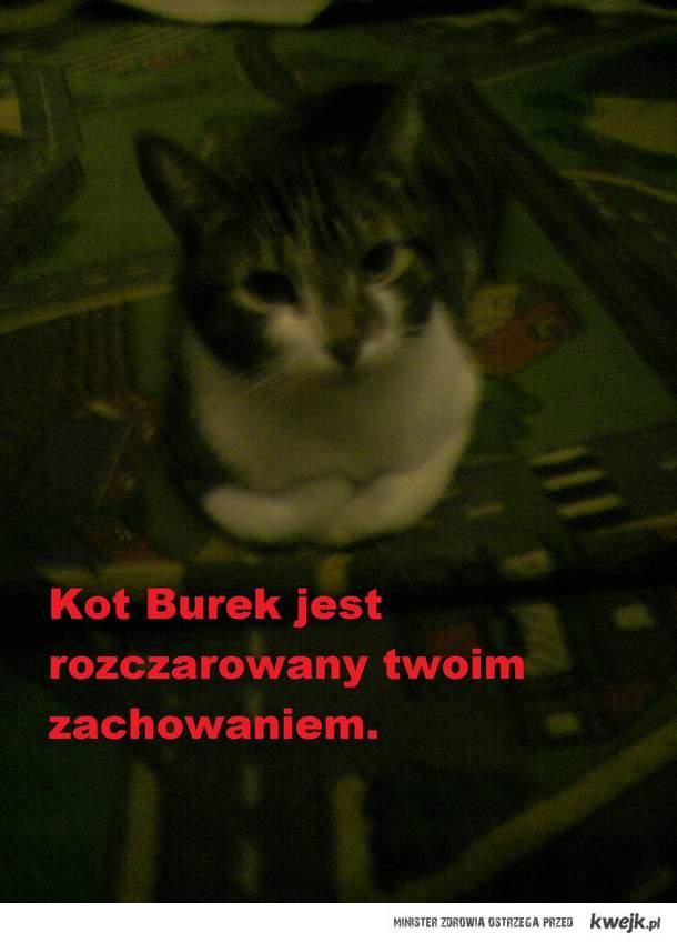 Kot Burek
