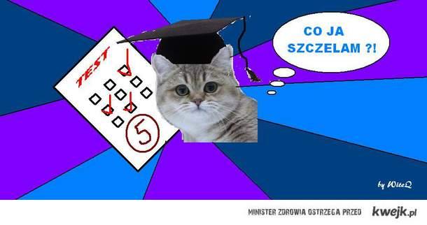 kociak ; )