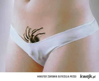 pajączek
