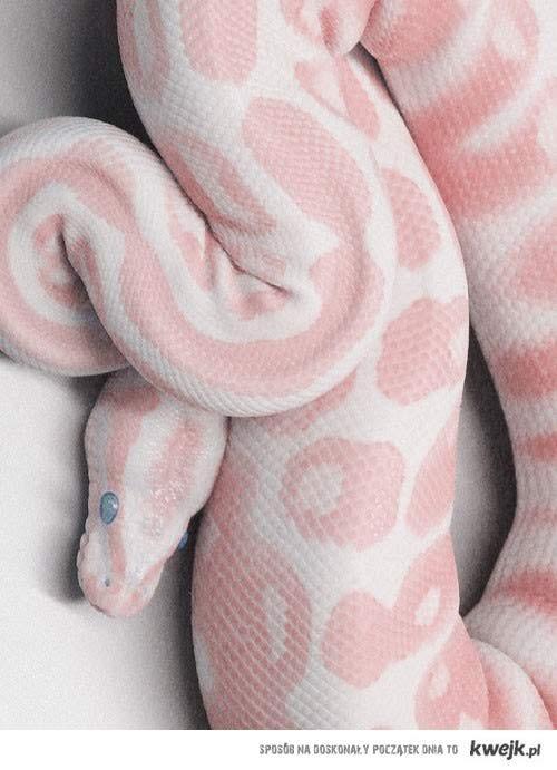 pinksssnake