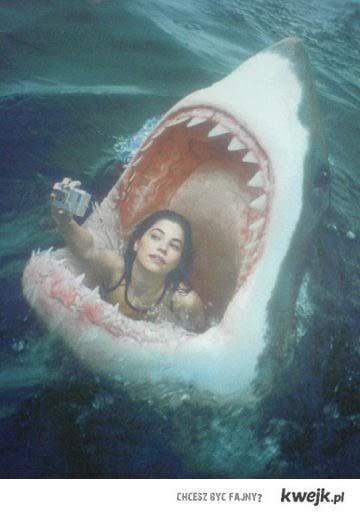 FCK Yeah! Shark!