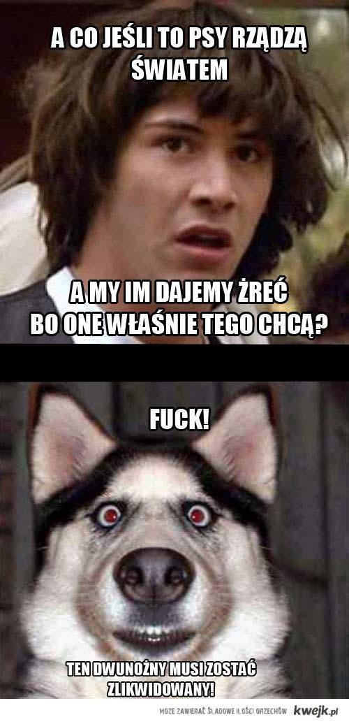 Prawda o psach