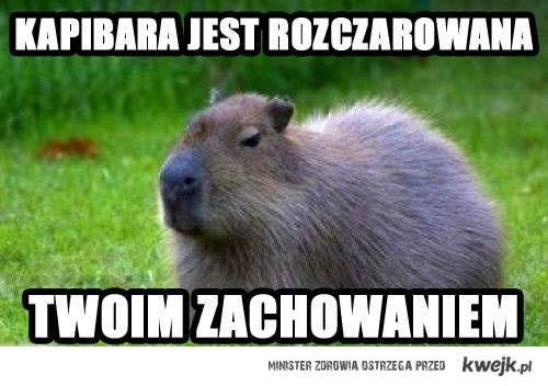 kapibara = Mały