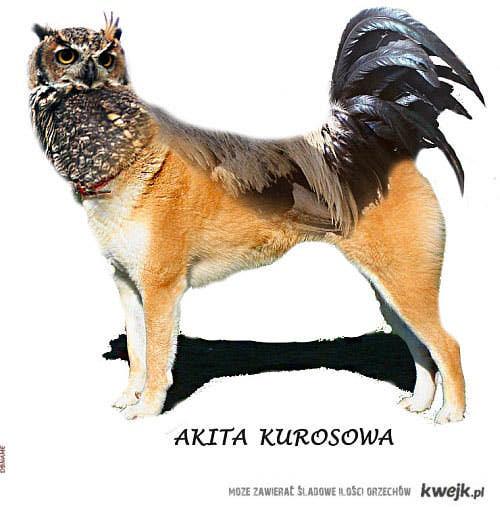 akita kurosowa