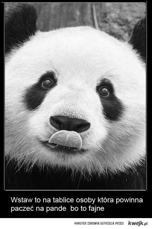 Paczzzz panda