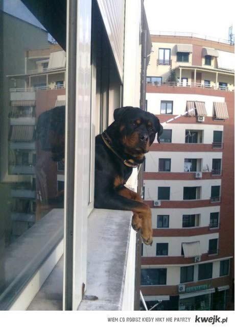 takie tam w oknie