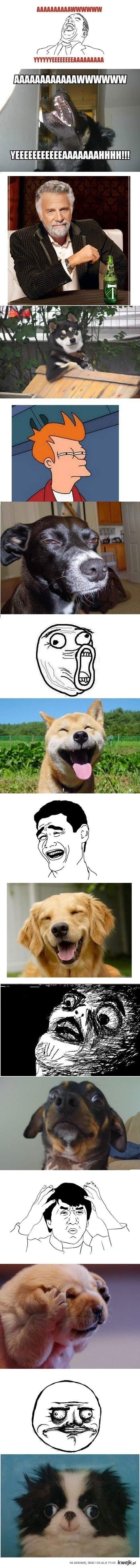 psy memów
