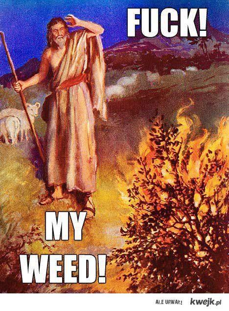 Fuck! My Weed!
