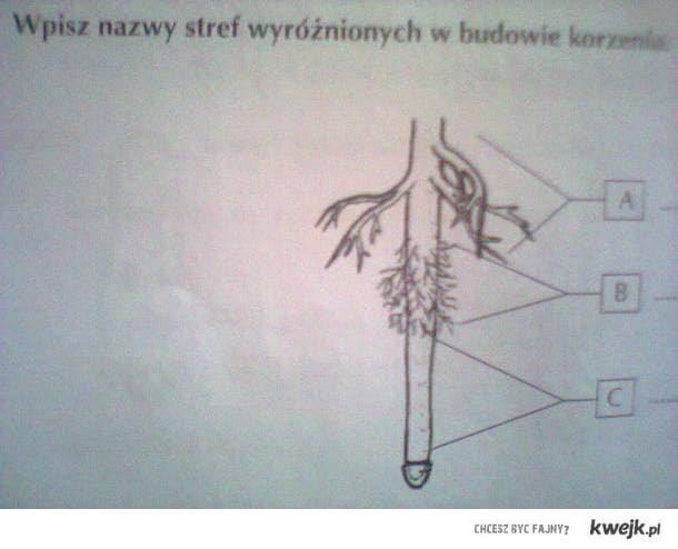 zadanie z biologii