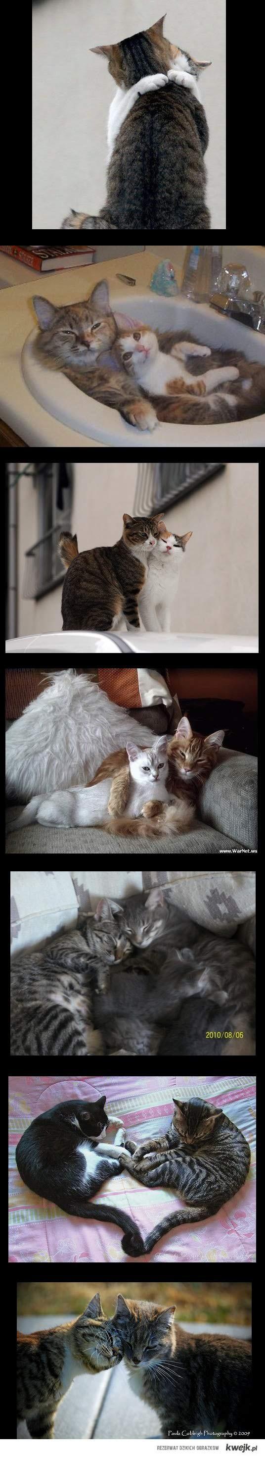 Kocie love !