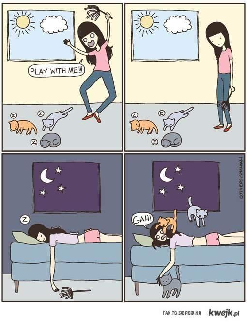 zabawa z kotami