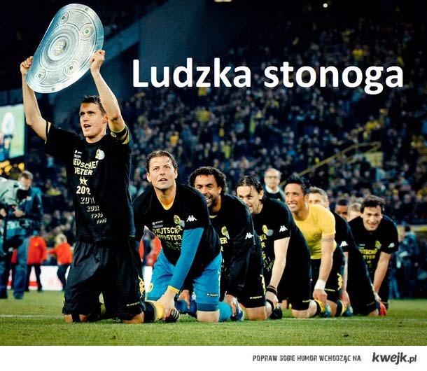 Borussia ludzka stonoga