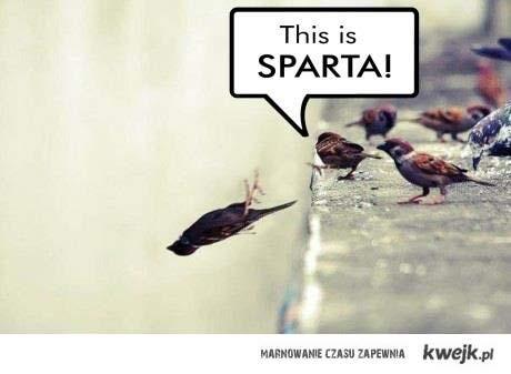 ptasia Sparta