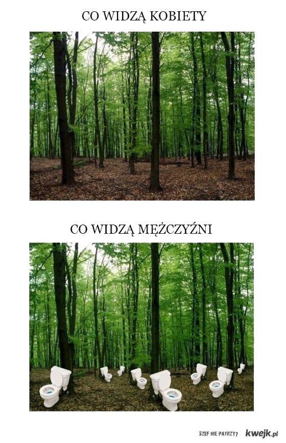 co widzimy w lesie