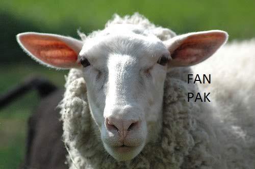Fan Pak, Hade s FaN PaK !