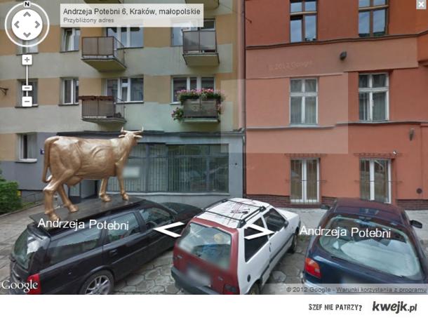 Złota Krowa w Krakowie