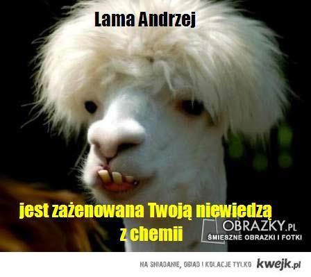 Lama Andrzej