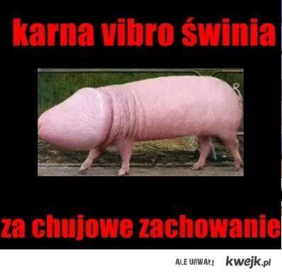 Karna vibro świnia