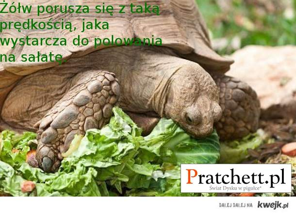 Żółw porusza się z prędkością...