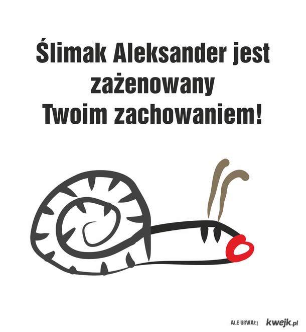 ślimak aleksander